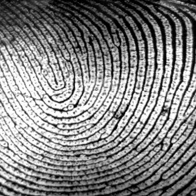 How Secure Are Your Mobile Files With Fingerprint Security?